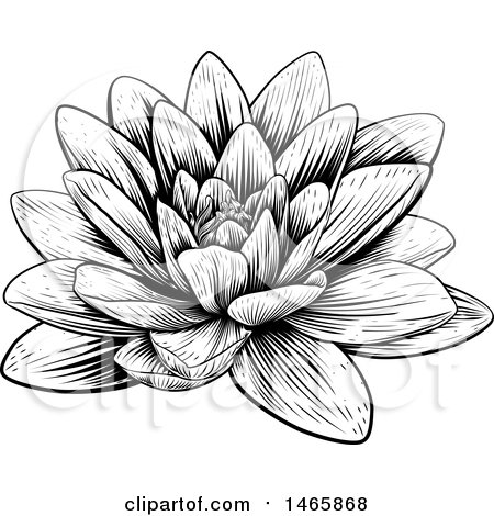 Clipart of a Vintage Black and White Engraved or Woodcut Blooming Waterlily Lotus Flower - Royalty Free Vector Illustration by AtStockIllustration