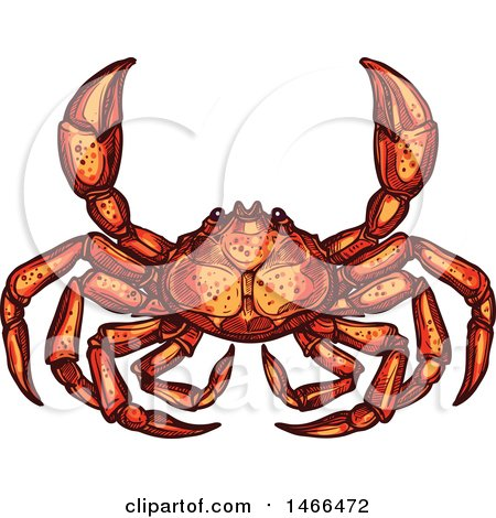 Clipart of a Sketched Crab - Royalty Free Vector Illustration by Vector Tradition SM