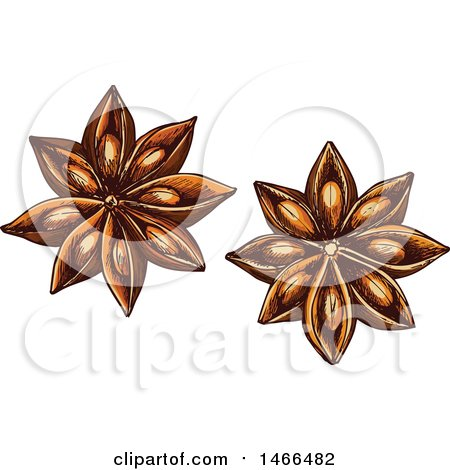 Clipart of a Sketched Herb, Star Anise - Royalty Free Vector Illustration by Vector Tradition SM