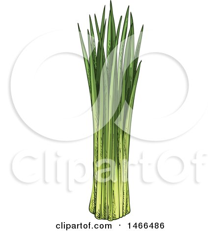 Clipart of a Sketched Herb, Chives - Royalty Free Vector Illustration by Vector Tradition SM
