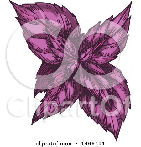 Clipart of a Sketched Herb, Purple Basil - Royalty Free Vector Illustration by Vector Tradition SM