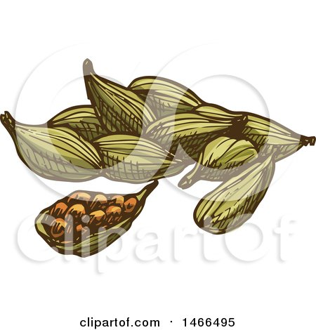 Clipart of a Sketched Spice, Cardamon - Royalty Free Vector Illustration by Vector Tradition SM