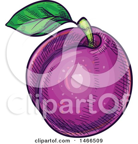 Clipart of a Sketched Plum - Royalty Free Vector Illustration by Vector Tradition SM