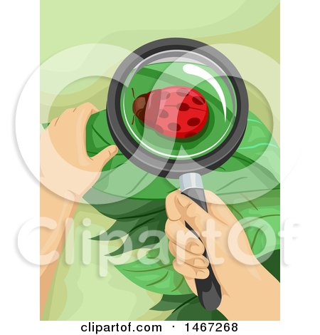 Clipart of a Magnifying Glass over a Ladybug on a Leaf - Royalty Free Vector Illustration by BNP Design Studio