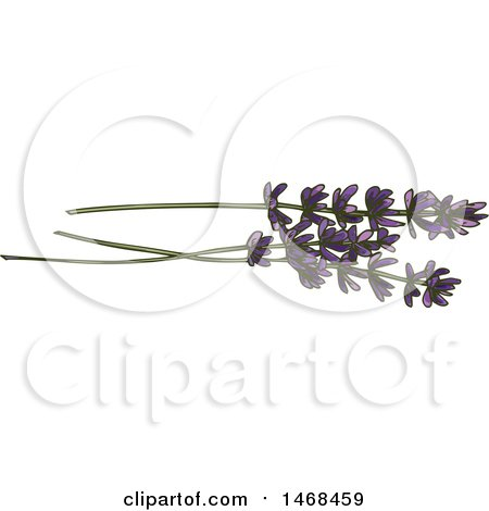 Clipart of Sketched Lavender - Royalty Free Vector Illustration by Vector Tradition SM