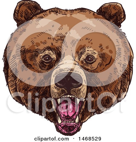 Clipart of a Sketched Bear Face - Royalty Free Vector Illustration by Vector Tradition SM