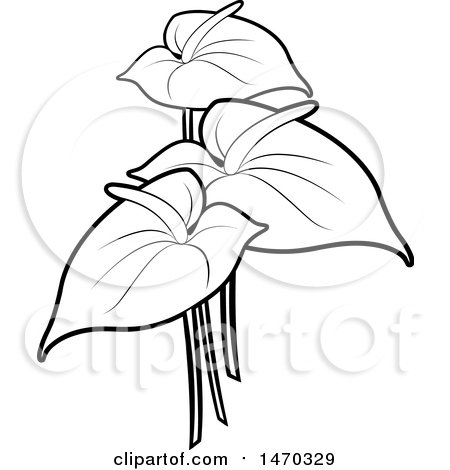 Clipart Of Black And White Anthurium Flowers