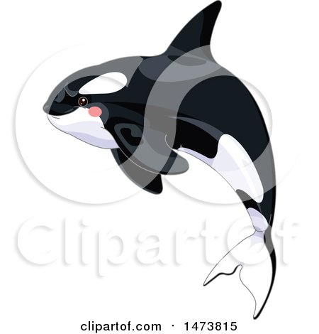 Clipart of a Jumping Cute Killer Orca Whale - Royalty Free Vector Illustration by Pushkin