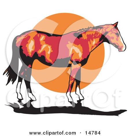 Brown Horse With White Feet Standing Against A Sunset  Posters, Art Prints