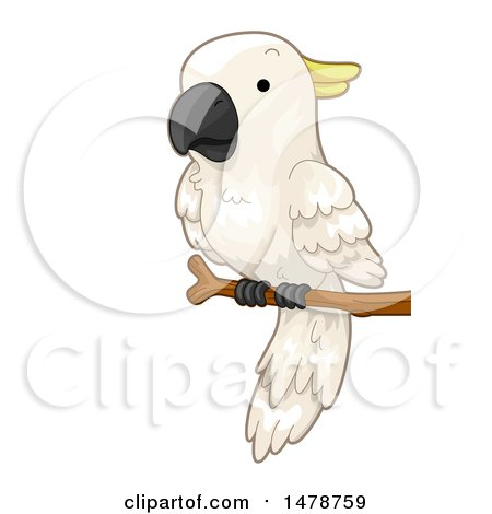 Clipart of a Perched Cockatoo Parrot - Royalty Free Vector Illustration by BNP Design Studio