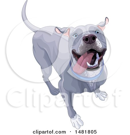 Cute Happy Blue or Silver Pitbull Dog Posters, Art Prints