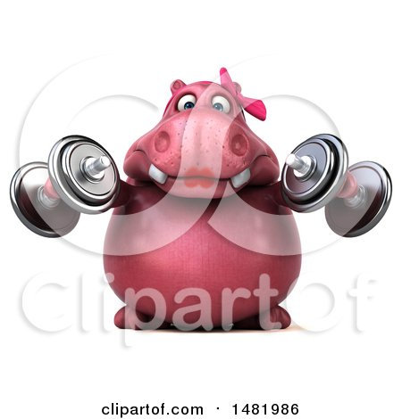 Clipart of a 3d Pink Henrietta Hippo Character Working out with Dumbbells, on a White Background - Royalty Free Illustration by Julos