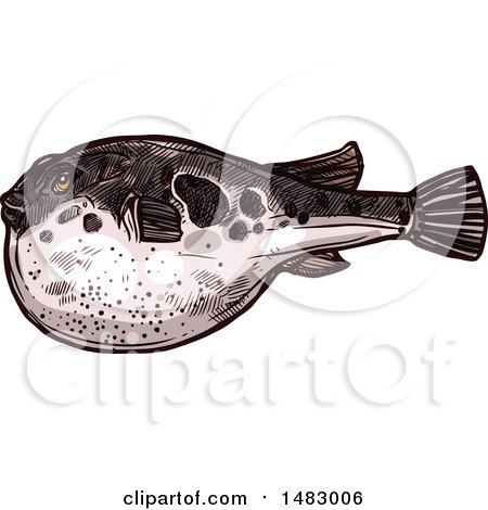 Clipart of a Sketched Blowfish - Royalty Free Vector Illustration by Vector Tradition SM