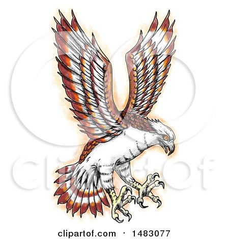 Clipart of a Swooping Osprey in Sketched Tattoo Style - Royalty Free Illustration by patrimonio