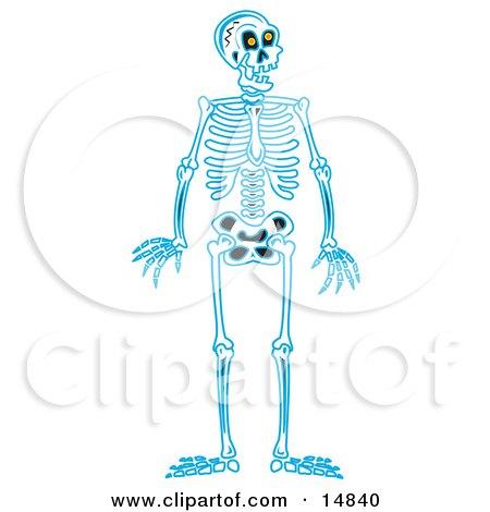 Blue Human Skeleton Standing Upright Clipart Illustration by Andy Nortnik