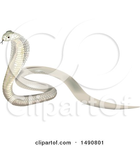 Clipart of a Beautiful White Indian Cobra - Royalty Free Vector Illustration by dero