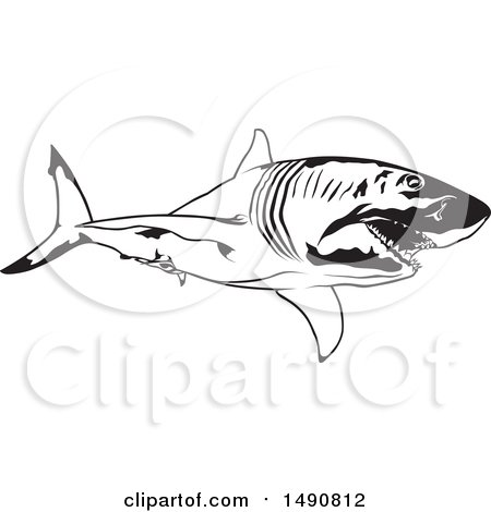 Clipart of a Black and White Great White Shark - Royalty Free Vector Illustration by dero
