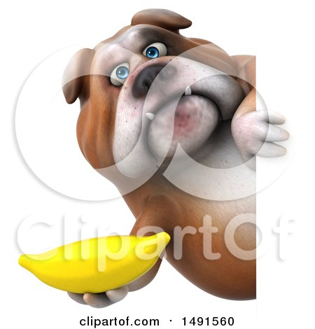 Clipart of a 3d Bill Bulldog Mascot Holding a Banana, on a White Background - Royalty Free Illustration by Julos