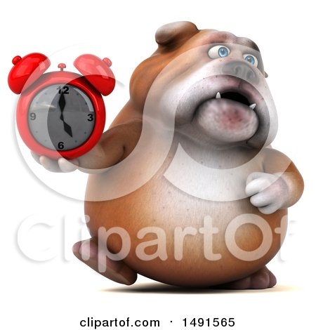 Clipart of a 3d Bill Bulldog Mascot Holding an Alarm Clock, on a White Background - Royalty Free Illustration by Julos