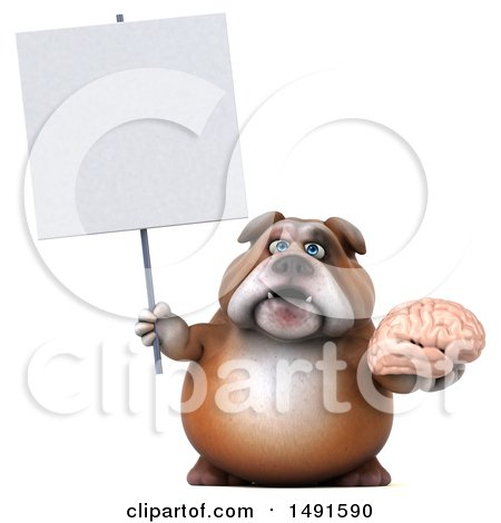 Clipart of a 3d Bill Bulldog Holding a Brain, on a White Background - Royalty Free Illustration by Julos