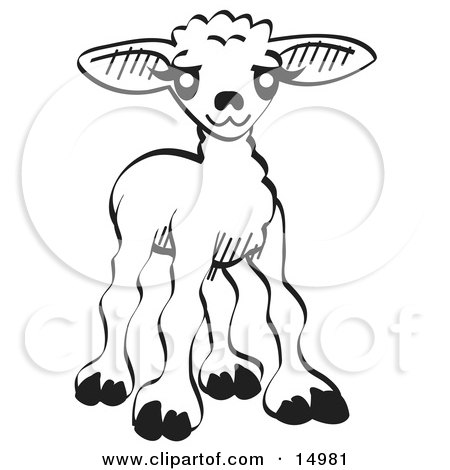 Little Baby Lamb, Black and White Clipart Illustration by Andy Nortnik