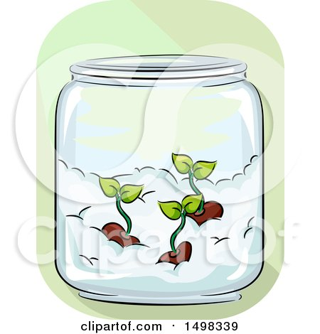 Clipart of a Jar with Germinated Seeds on Cotton - Royalty Free Vector Illustration by BNP Design Studio