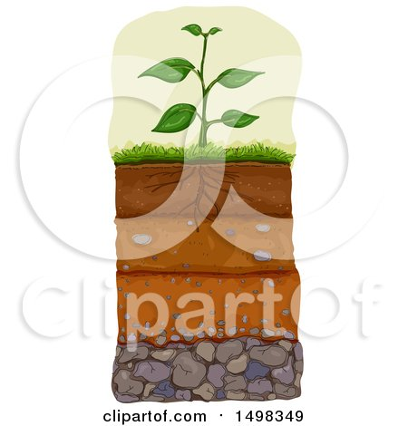 Clipart of a Plant with Layers of Soil Beneath - Royalty Free Vector Illustration by BNP Design Studio