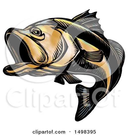 Clipart of a Largemouth Bass Fish, in Sketch Style, on a White Background - Royalty Free Illustration by patrimonio