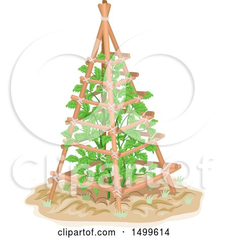 Clipart of a Tomato Plant Growing on a Trellis - Royalty Free Vector Illustration by BNP Design Studio