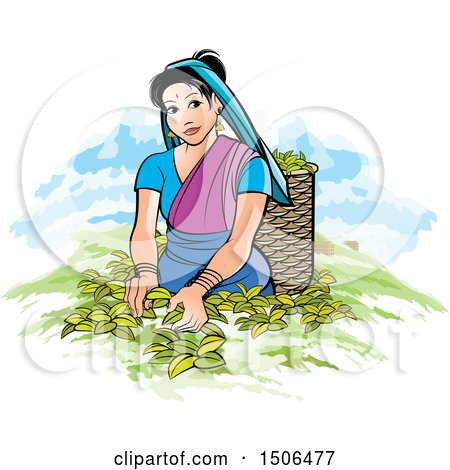 Clipart of a Sri Lankan Lady Tea Plucking - Royalty Free Vector Illustration by Lal Perera