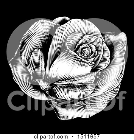 Clipart of a Black and White Engraved Rose Flower on Black - Royalty Free Vector Illustration by AtStockIllustration