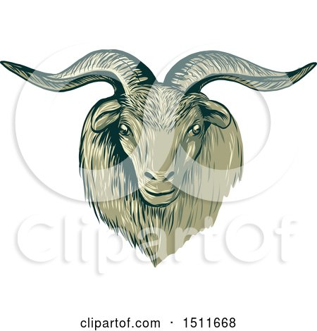 Clipart of a Sketched Cashmere Goat Head - Royalty Free Vector Illustration by patrimonio