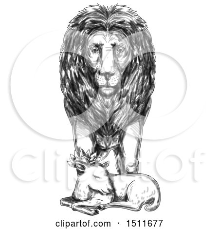 Clipart of a Sketched Male Lion Guarding a Sleeping Lamb, on a White Background - Royalty Free Illustration by patrimonio