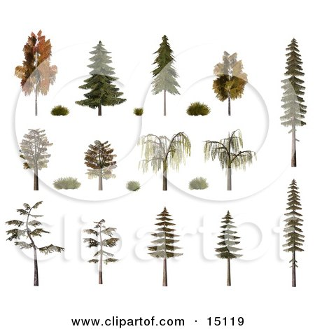 3d Trees And Shrubs, Including Birch, Oak, Pine, Fir And Willow With Fall Foliage Clipart Illustration by Anastasiya Maksymenko