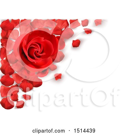 Clipart of a 3d Red Rose and Petals over Shaded White - Royalty Free Vector Illustration by dero