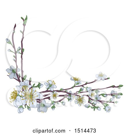 Clipart of a Corner Border of Branches with White Spring Blossoms - Royalty Free Vector Illustration by AtStockIllustration