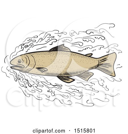 Clipart of a Brown Trout Forging Through Waves, on a White Background - Royalty Free Illustration by patrimonio