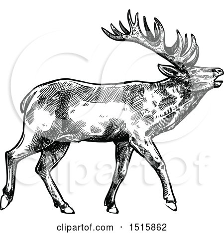 Clipart of a Black and White Sketched Reindeer - Royalty Free Vector Illustration by Vector Tradition SM
