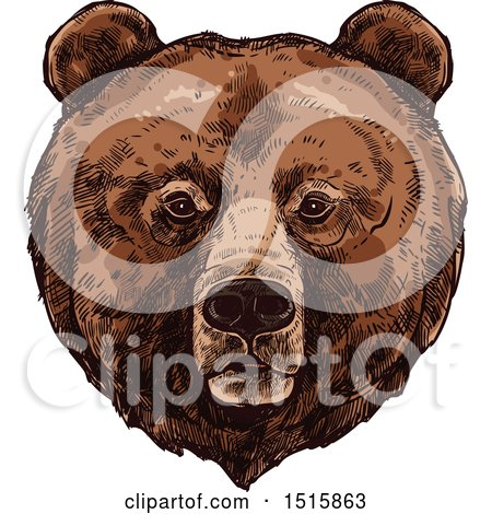 Clipart of a Sketched Grizzly Bear Face - Royalty Free Vector Illustration by Vector Tradition SM