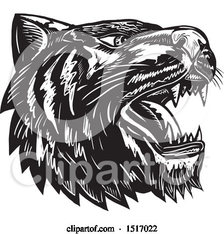 Clipart of a Tiger Head Roaring, in Black and White Woodcut - Royalty Free Vector Illustration by patrimonio