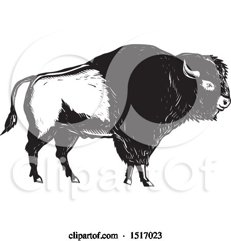 Clipart of an American Bison, in Black and White Woodcut - Royalty Free Vector Illustration by patrimonio