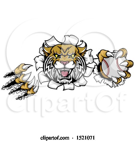 Clipart of a Vicious Wildcat Mascot Shredding Through a Wall with a Baseball - Royalty Free Vector Illustration by AtStockIllustration