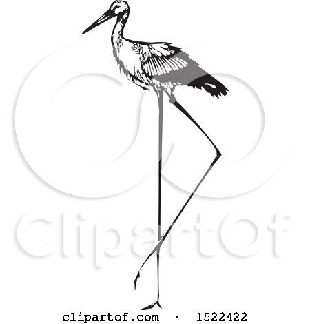 Clipart of a Stork Bird, Black and White Woodcut - Royalty Free Vector Illustration by xunantunich