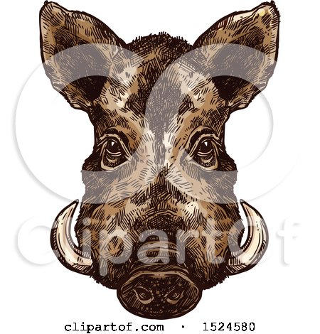 Clipart of a Wild Boar Face in Sketched Style - Royalty Free Vector Illustration by Vector Tradition SM