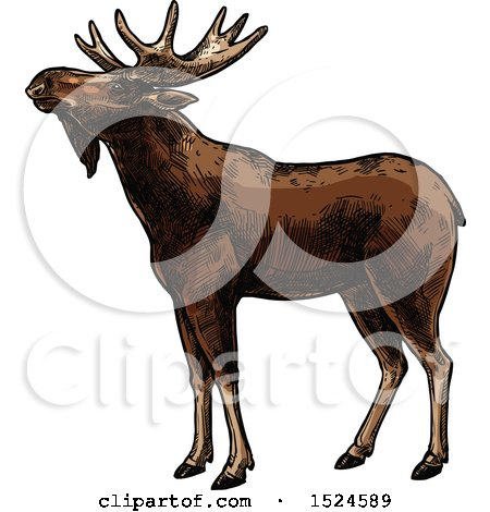 Clipart of a Moose in Profile in Sketched Style - Royalty Free Vector Illustration by Vector Tradition SM