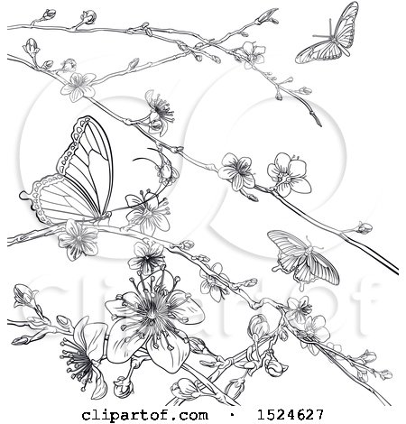 Clipart of a Lineart Scene of Cherry Blossoms and Butterflies - Royalty Free Vector Illustration by AtStockIllustration