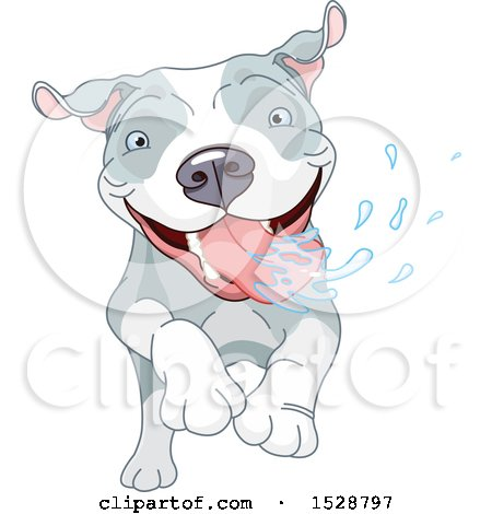 Happy Pit Bull Dog Running and Drooling Posters, Art Prints