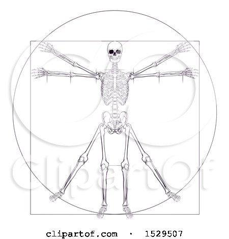 Clipart of a Leonard Da Vincis Skeleton Vitruvian Man - Royalty Free Vector Illustration by AtStockIllustration