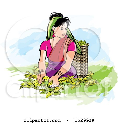 Clipart of a Sri Lankan Woman Plucking Tea Leaves - Royalty Free Vector Illustration by Lal Perera