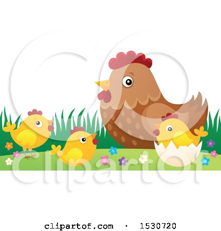 Mother Hen and Chicks Posters, Art Prints